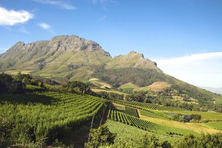 케이프 타운에 가까운 Franschhoek의 남쪽에 포도 원의 파노라마. 스텔 렌 보쉬. 남아프리카