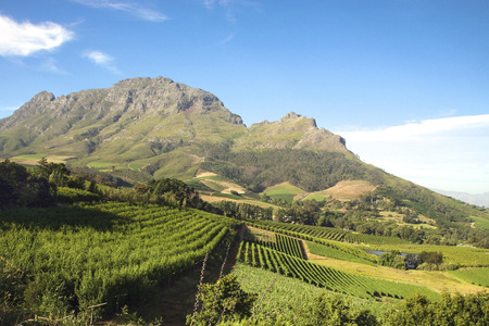 Panorama of a vineyard in the south of Franschhoek close to Cape Town. Stellenbosch. South Africa Stock Photo
