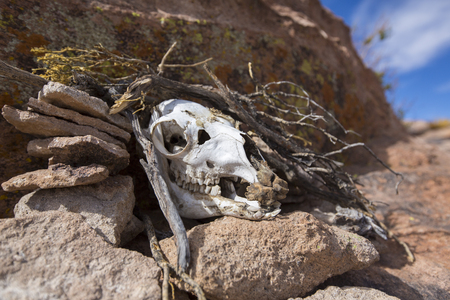 cow skull: Detail of rock formation and cow skull, part of the skeleton standing on rocks, blue sky in the background. Stock Photo