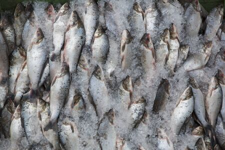 overfishing: Background of large group of fish in ices seen from above at the fish market of Manaus, Brazil 2015