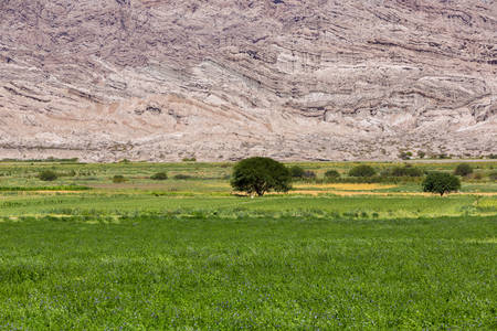 geological formation: Scenic view of geological rock formation, meadow and a tree in the middle. Cafayate, Salta Province. Argentina