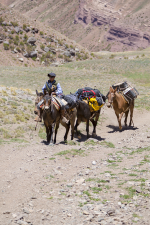 aconcagua: Mountain landscape in the Andes with local Argentinian man and donkeys carrying bags at the Aconcagua National Park. Landmark near Mendoza, Argentina 2014 Editorial
