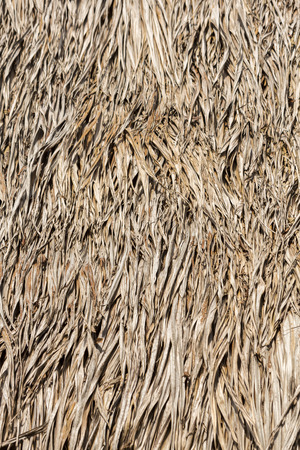 indigenous: Closeup of sape grass roof, from Indigenous tribe house village near Manaus, Amazonas State, Brazil 2015