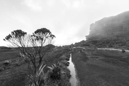 volcanic stones: Landscape at the top of Mount Roraima in the morning. Strange shaped black volcanic stones, water and endemic plants. Gran Sabana. Venezuela 2015 (Black and white)