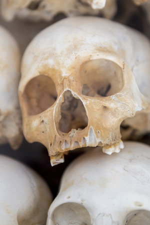 phnom penh: Group of skulls and bones found in various Killing fields during the genocide by Pol Pot, Phnom Penh, Cambodia