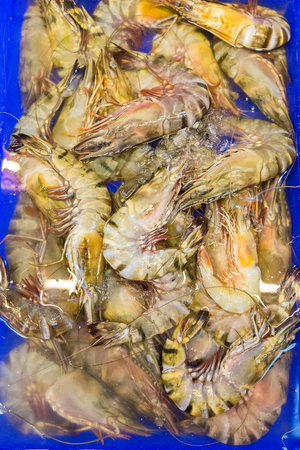 barramundi: Case of fresh giant prawns displayed and on sale in fish market, Koh Chang Island. Thailand Stock Photo