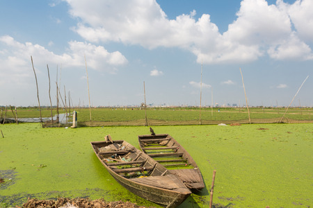phnom penh: Two small and old wooden boats floating on green water with rice fields in the background. Rural scene and countryside near Phnom Penh. Cambodia