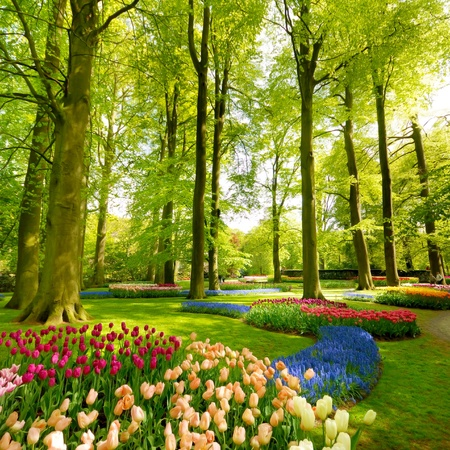 Keukenhof park exhibition, Lisse Netherlands photo