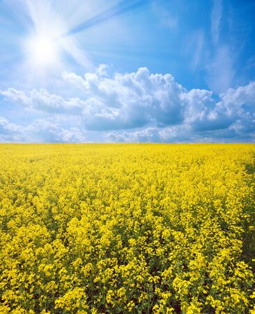 Oilseed under cloudy sky sunny day photo