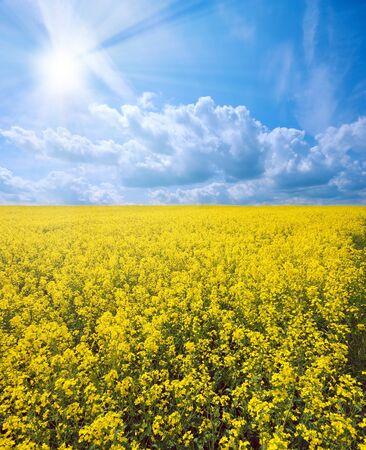 canola: Oilseed under cloudy sky sunny day