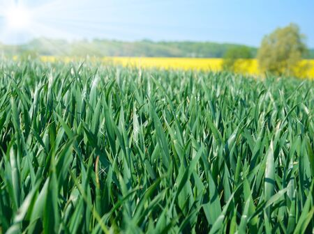 Green field under sunny blue sky Stock Photo - 9290955
