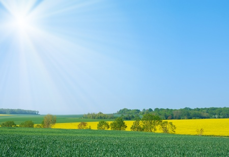 Wheat and canola fields under clear blue sky Stock Photo - 9290913