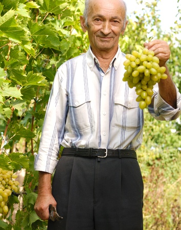 yard work: The smiling senior wine-grower shows grapes cluster