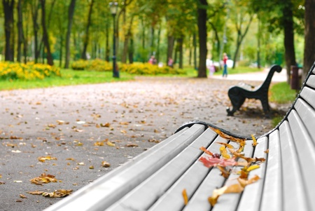 Bench in the autumn park Stock Photo - 9291047