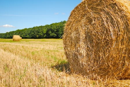 Hay roll at the field under cloudy sky Stock Photo - 9291359