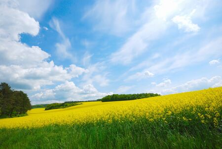 Rape field Stock Photo - 9291301