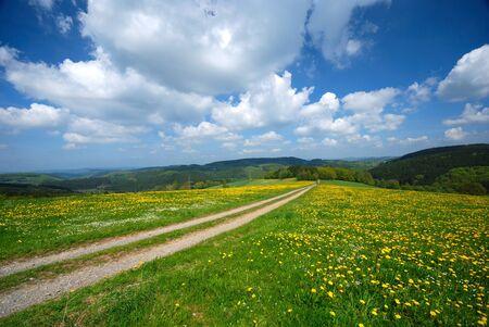 Dandelion field against blue cloudy sky Stock Photo - 9291349