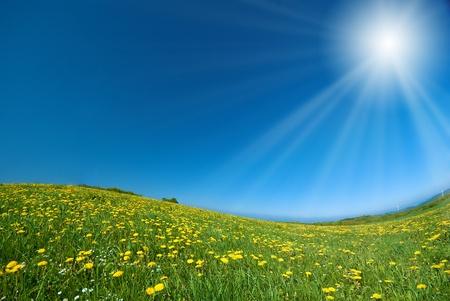 Paardebloemen onder de blauwe hemel