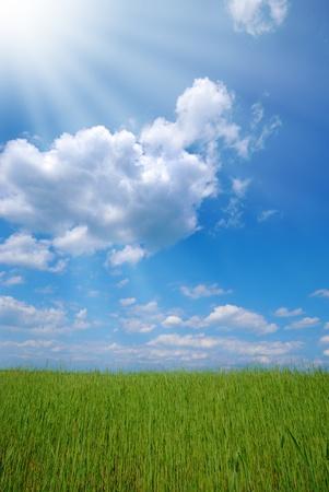 Green wheat field under cloudy sunny blue sky Stock Photo - 9672606