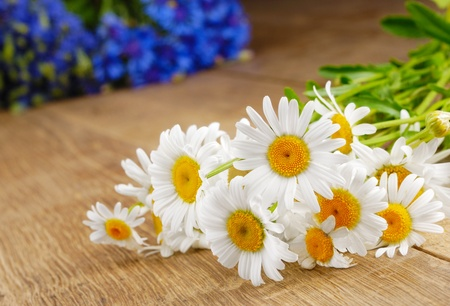 white with daisies: Fresh camomile flowers on the wooden table