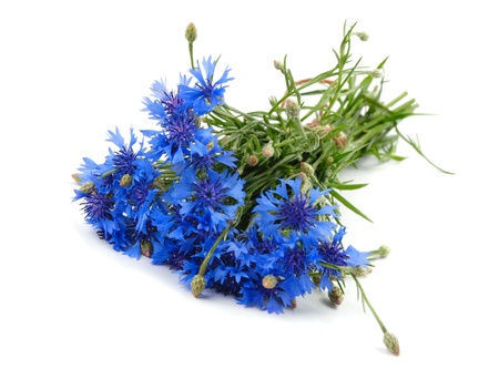 Cornflower bouquet isolated on white background photo