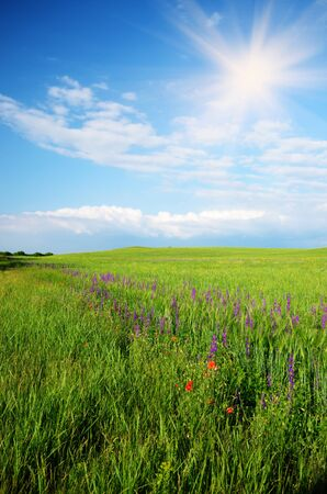 Green meadow under blue sky Stock Photo - 14158720