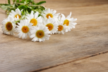 chamomile: Fresh chamomile flowers on the wooden table