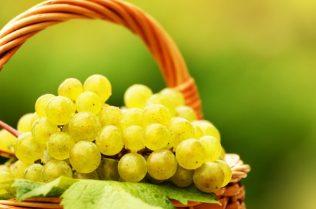 Wicker basket full of green grapes at harvest time photo