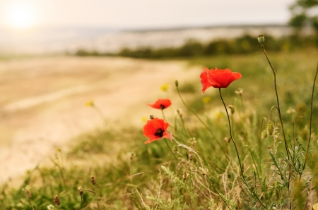 Poppies with mountains at background Stock Photo - 16525875