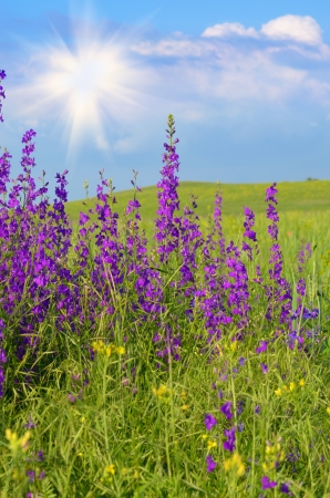 Green field under blue sunny sky Stock Photo - 16938543