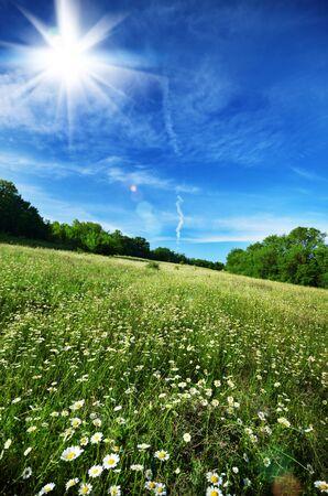 Field of daisy flowers under blue cloudy sky Stock Photo - 18150467