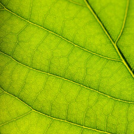 macro photo: Green leaf surface texture macro closeup photo Stock Photo