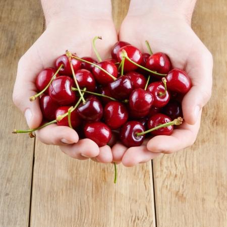 handful: Mans hands handful showing ripe organic cherries Stock Photo