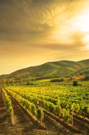 Landschap met groene wijngaarden en bergen op de achtergrond