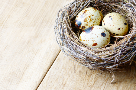 quail nest: Nest with quail eggs on the wooden background