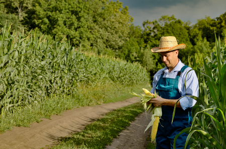 Middle age Farmer inspecting maize at field Standard-Bild - 119332037