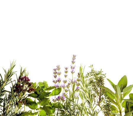 borde de flores: Hierbas mediterr�neas sobre fondo blanco puro de lavanda, salvia, or�gano, tomillo y un mont�n de primavera verano concepto de copyspace