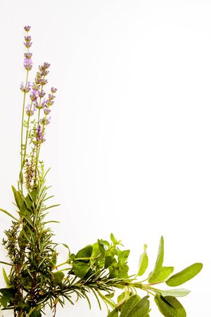 Bunch of Mediterranean herbs on pure white background  lavender, sage, oregano, thyme  Spring and summer concept  photo