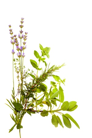 Bunch of Mediterranean herbs on pure white background  lavender, sage, oregano, thyme  Spring and summer concept  Stock Photo