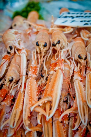 scottish: Scottish langoustines, a shellfish similar to lobster, for sale in Borough Market, London