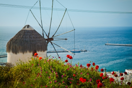sea flowers: Windmill, the folklore museum, Mykonos, Greece, seen through wild poppies