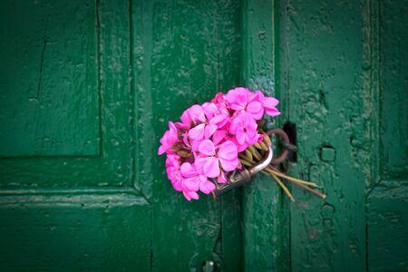 green door: Pink bouquet of geraniums left as a love message on an old textured door.  Stock Photo