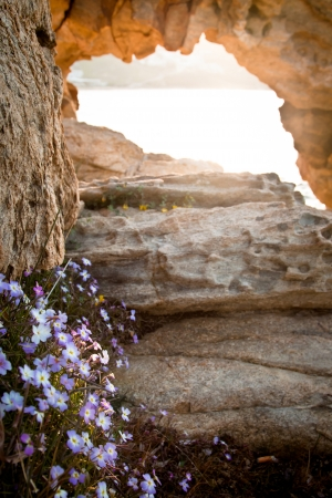 Wild flowers by a natural arch in the rocks by the sea on a Greek island (Mykonos). photo