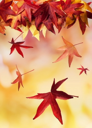 Colourful autumn leaves falling to the ground  Stock Photo - 14044055