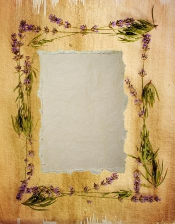 lavanda: Acuarela de lavanda marco con una hoja de la vendimia sensaci�n de angustia del papel de acuarela de edad en el centro de su mensaje