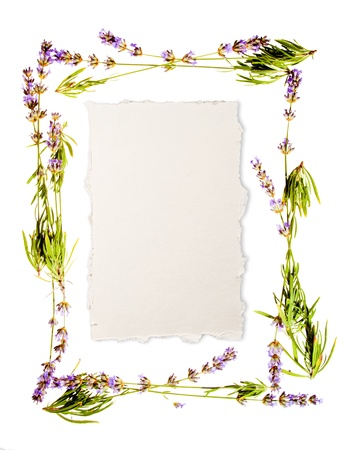 Lavender frame isolated on white  Sheet of aged watercolour paper in the centre for your message  If you don