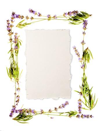 foglio bianco: Telaio lavanda isolato su foglio bianco di carta da acquerello et� al centro del messaggio Se non si