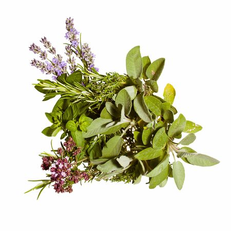 Spring and summer herbs isolated on white  lavender, thyme, oregano, rosemary, sage
