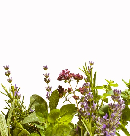 Summer herbs isolated against white background  lavender, rosemary, sage and oregano in bloom   Stock Photo