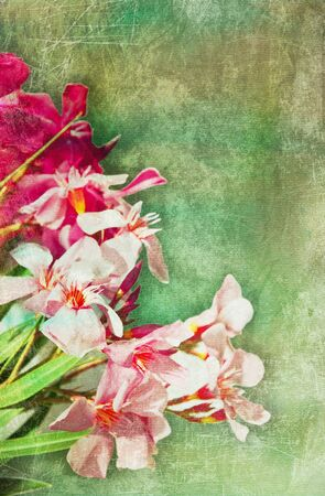 oleander: Vintage illustration of oleander flowers frame  Distressed treatment for a retro feel  Combination of hand-drawn material and photographs
